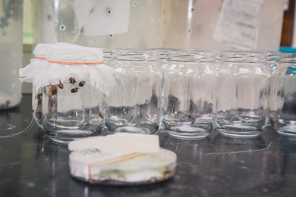 entomologia_20